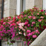 blooming-baskets-filled-delivered-pubs-restaurants243