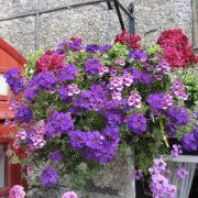 blooming-baskets-pub-flowers-by-post208