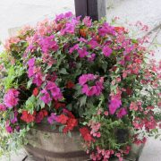 blooming-baskets-pub-flowers-by-post211