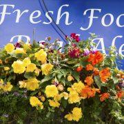 blooming-hanging-baskets-filled-delivered-trade375