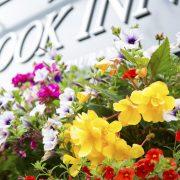 blooming-hanging-baskets-filled-delivered-trade434