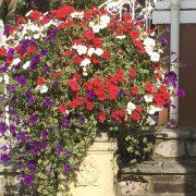 blooming-hanging-baskets015_1