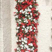 blooming-hanging-baskets021_1