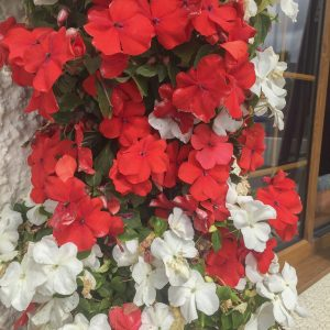 blooming-hanging-baskets022_1