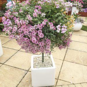 blooming-hanging-baskets029_1