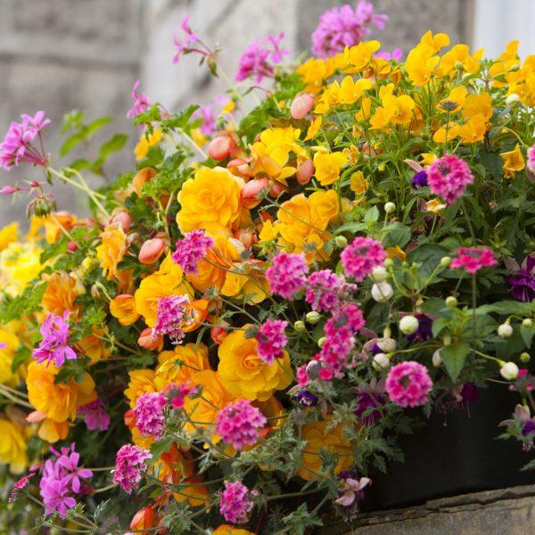 bloomingbasketsalisonjuly2013-50